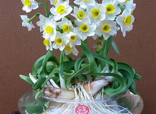 Lựa chọn một số loại hoa thường gặp 2