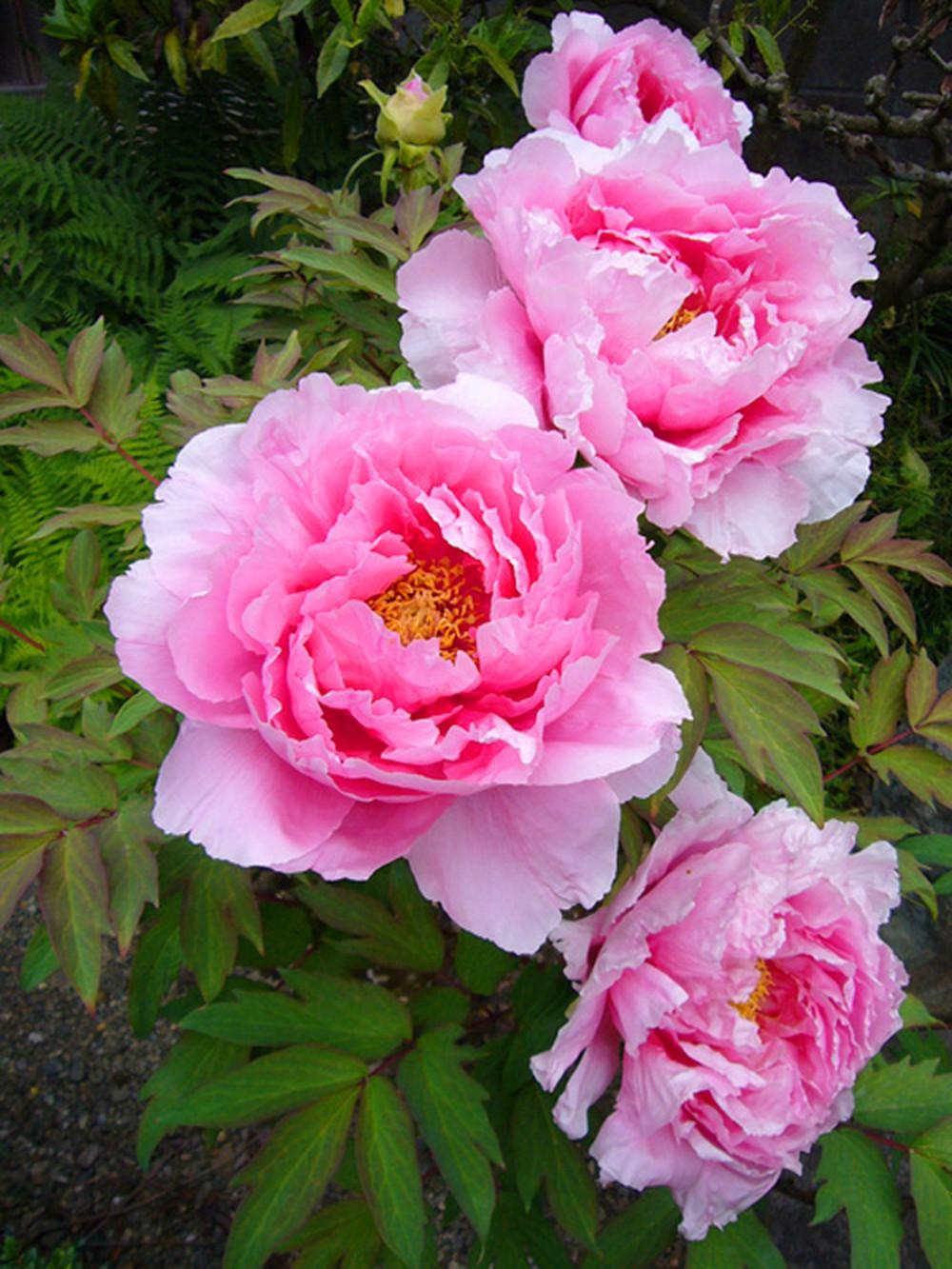 Lựa chọn một số loại hoa thường gặp 13