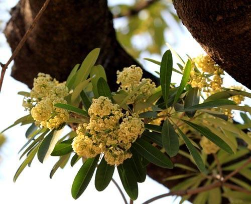 Lựa chọn một số loại hoa thường gặp 1