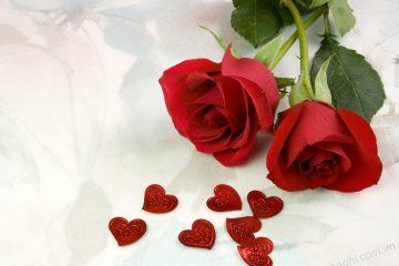Một số loài hoa mang ngôn ngữ cho tình yêu