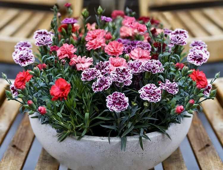 Lựa chọn một số loại hoa thường gặp 11