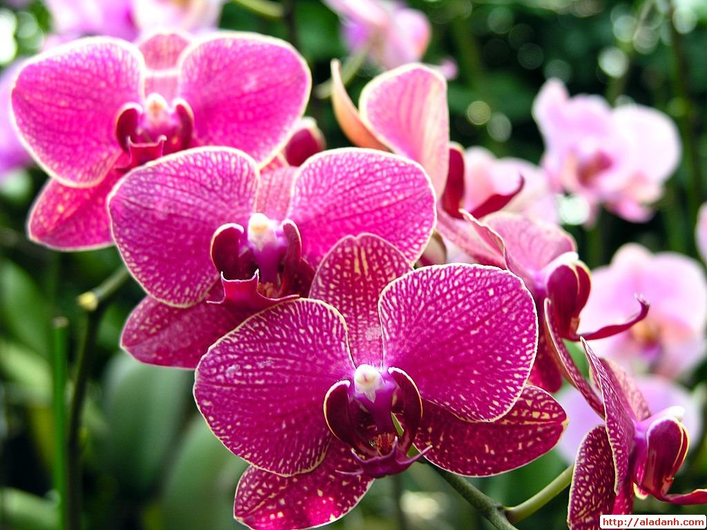 Lựa chọn một số loại hoa thường gặp 9