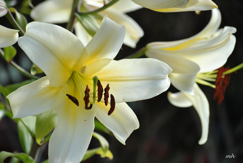 Lựa chọn một số loại hoa thường gặp 6