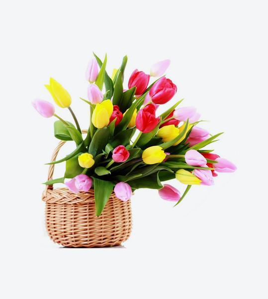 Lựa chọn một số loại hoa thường gặp 3