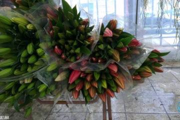 Một số lưu ý để vận chuyển hoa tươi an toàn