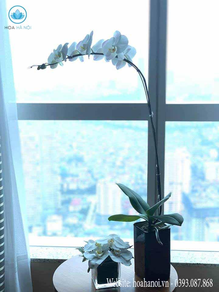 Một số mẫu hoa lan hồ điệp của điện hoaNga's Flower 1