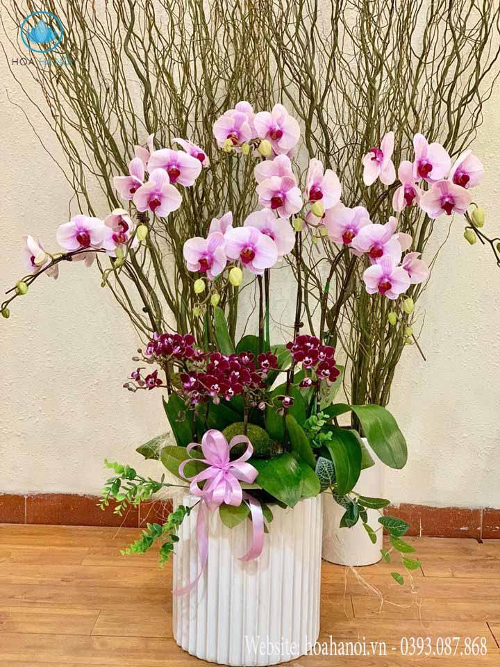 Một số mẫu hoa lan hồ điệp của điện hoaNga's Flower 3