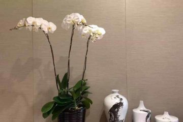 Cập nhật một số mẫu hoa Lan Hồ Điệp tại điện hoa Nga's Flowers