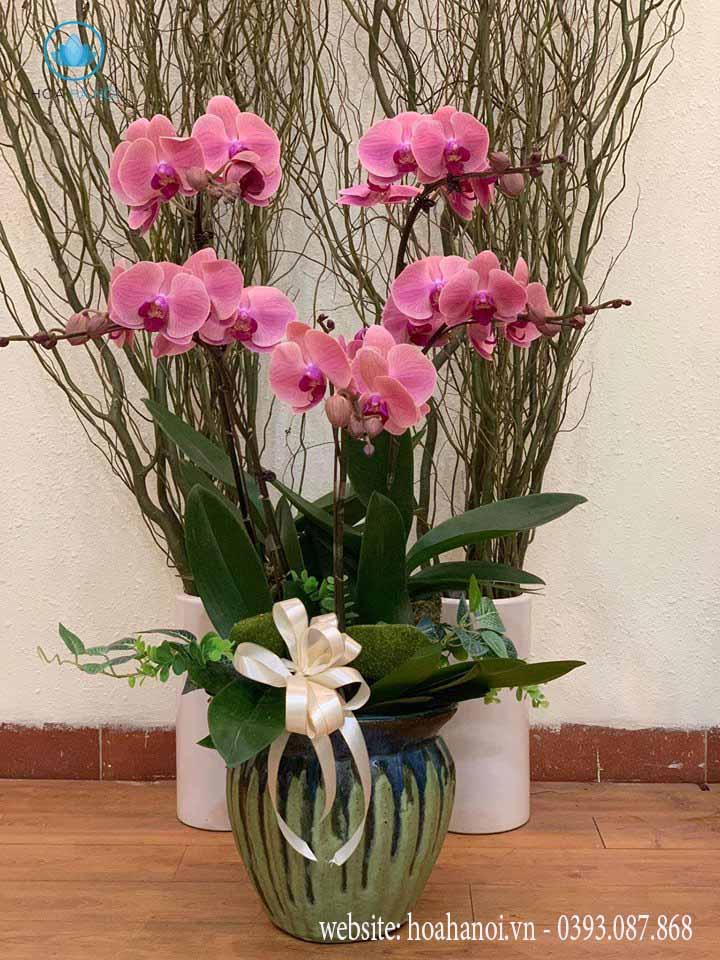 Một số mẫu hoa lan hồ điệp của điện hoaNga's Flower 7