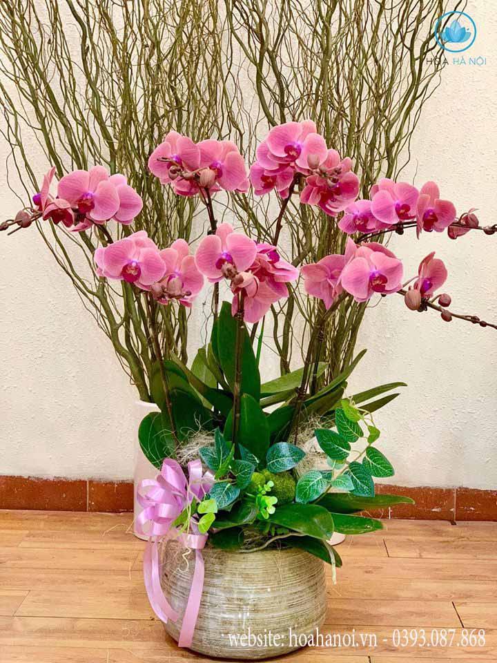 Một số mẫu hoa lan hồ điệp của điện hoaNga's Flower 10