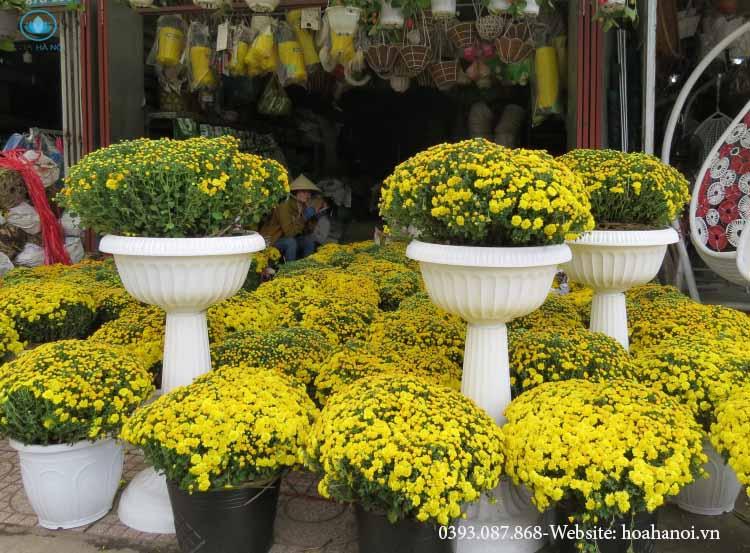 Những loài hoa nên chưng trong ngày tết để rước tài lộc cho gia chủ 5