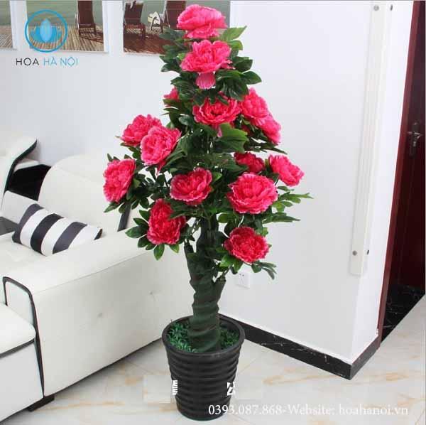 Những loài hoa nên chưng trong ngày tết để rước tài lộc cho gia chủ 9