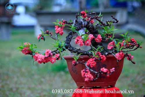 Những loài hoa nên chưng trong ngày tết để rước tài lộc cho gia chủ 2