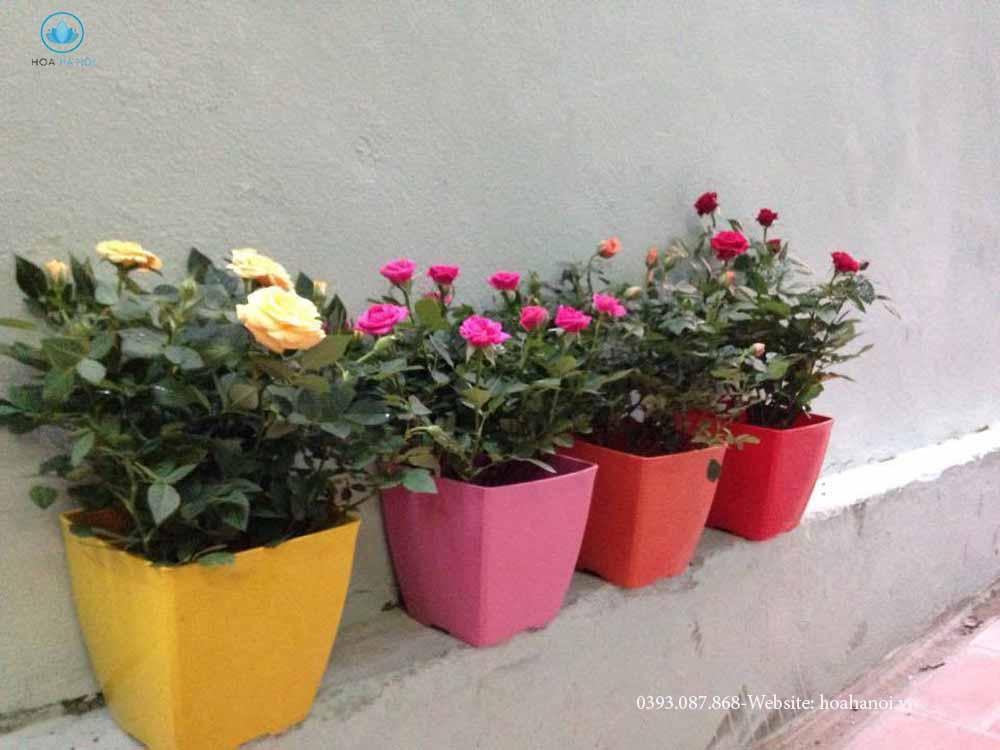 Những loài hoa nên chưng trong ngày tết để rước tài lộc cho gia chủ 10