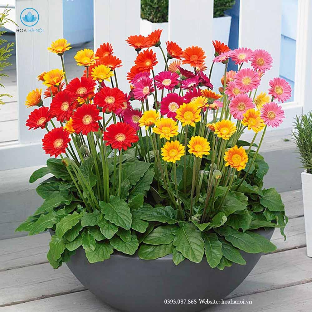 Những loài hoa nên chưng trong ngày tết để rước tài lộc cho gia chủ 8