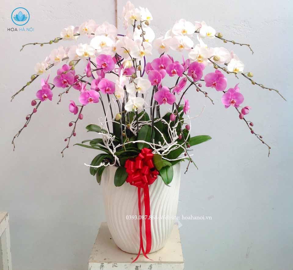Những loài hoa nên chưng trong ngày tết để rước tài lộc cho gia chủ 6