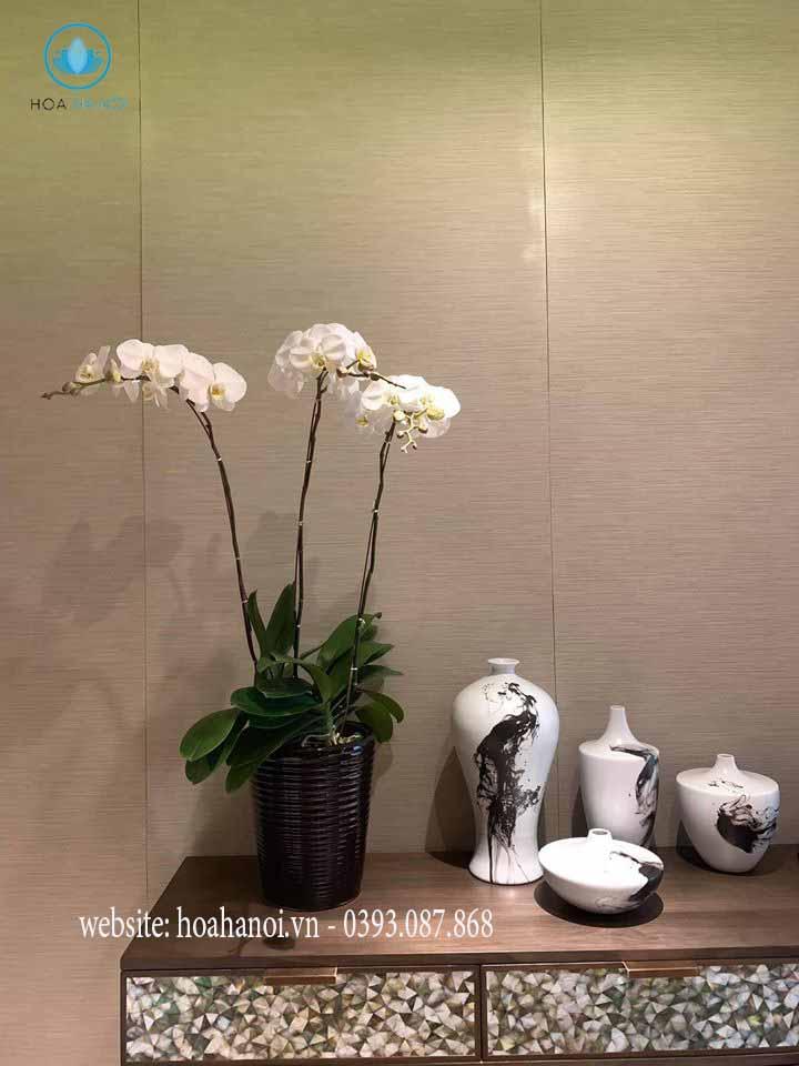 lan hồ điệp nữ hoàng các loài hoa