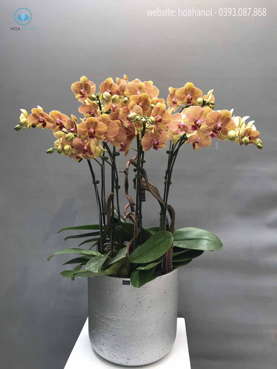 Một số mẫu hoa lan hồ điệp của điện hoaNga's Flower 8