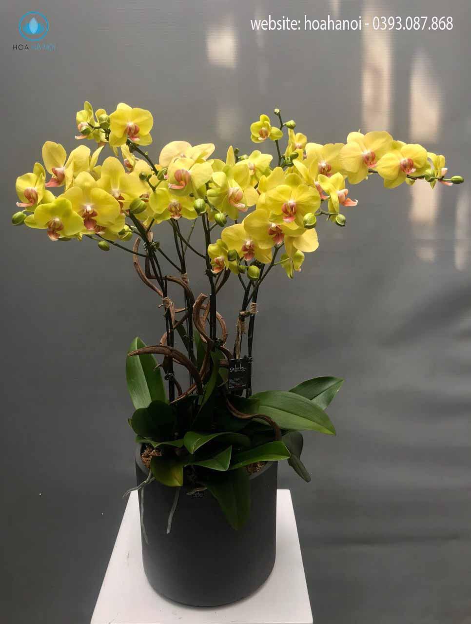 Một số mẫu hoa lan hồ điệp của điện hoaNga's Flower 11