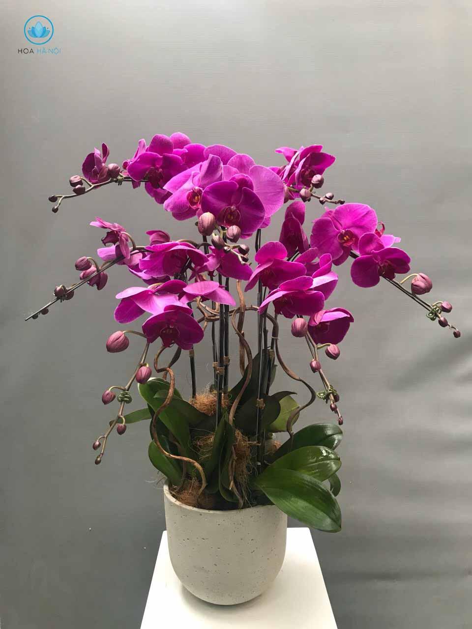 Một số mẫu hoa lan hồ điệp của điện hoaNga's Flower 12