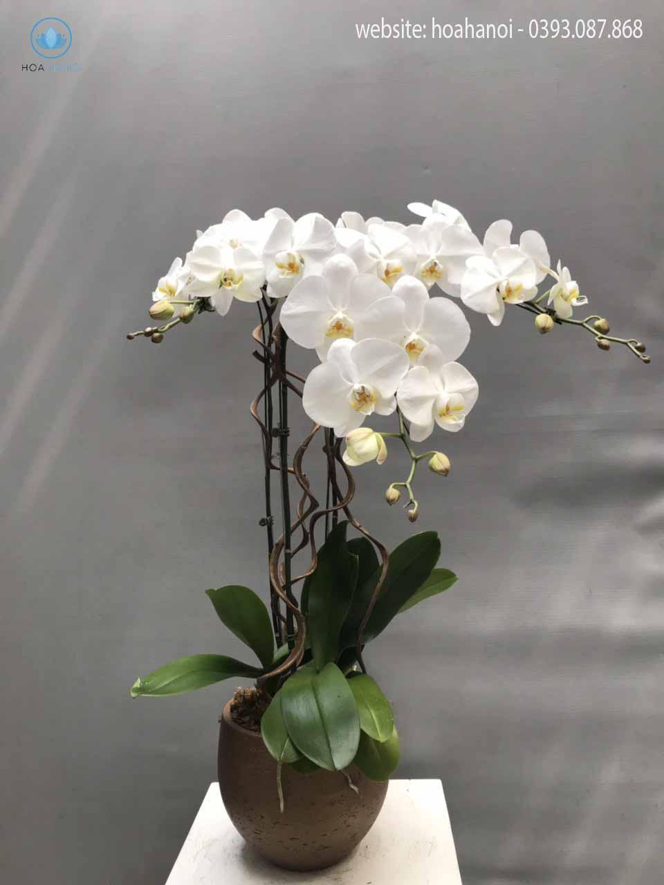 Một số mẫu hoa lan hồ điệp của điện hoaNga's Flower 2