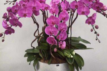 Sưu tầm những mẫu lan hồ điệp đẹp nhất tại điện hoa Nga's Flowers