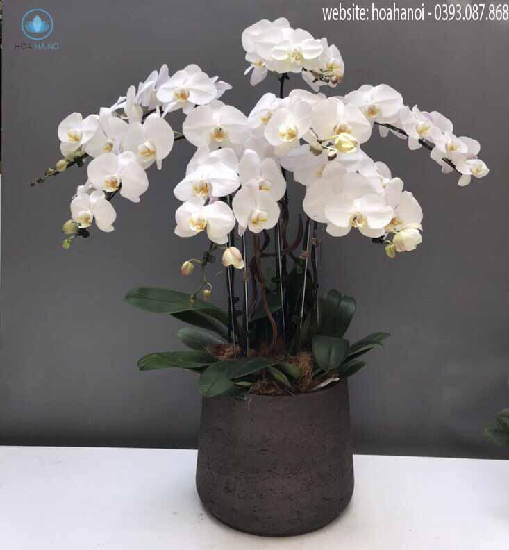 Một số mẫu hoa lan hồ điệp của điện hoaNga's Flower 4