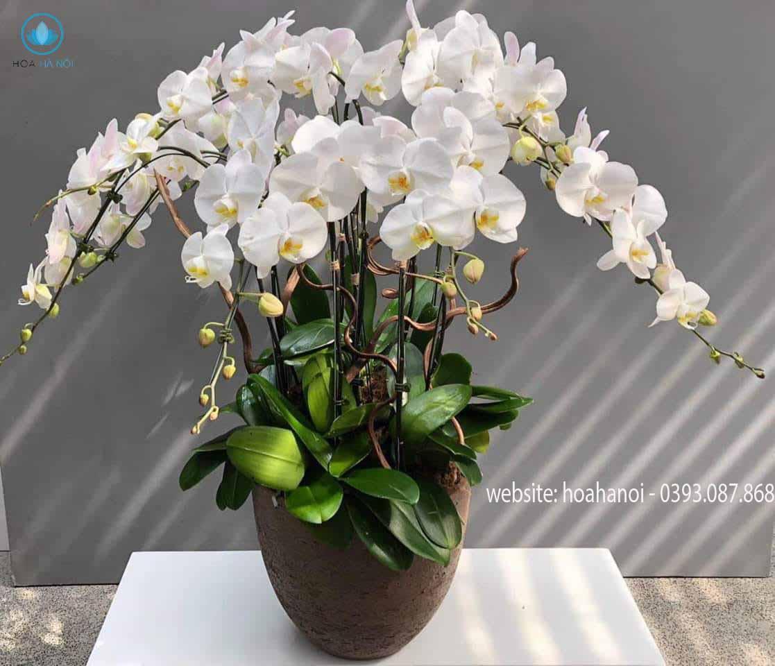 Một số mẫu hoa lan hồ điệp của điện hoaNga's Flower 5